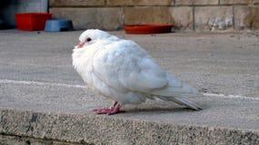 Vit fågel Arkivbild
