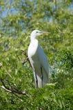 Vit fågel i ett träd nära vattnet Royaltyfria Foton