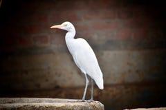 Vit fågel i morgonen arkivfoton