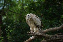 Vit fågel i zoo Royaltyfri Fotografi