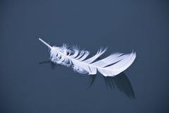 Vit fågelfjäder som svävar på mörker - blå isolerad lugnt vattensjö Royaltyfria Bilder
