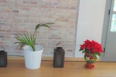 Vit för beröm för blommaPoinsetta detalj arkivbild