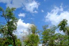 Vit fördunklar omgivna träd mot härlig klar himmel Arkivbild