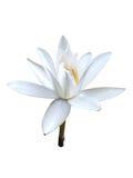 Vit filial för orkidéblomma Arkivbild
