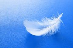 Vit fjäder på blått Royaltyfri Bild