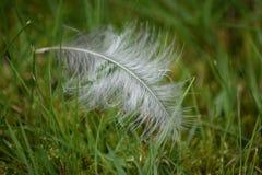 Vit fjäder på grönt gräs royaltyfria foton