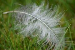 Vit fjäder på grönt gräs Fotografering för Bildbyråer