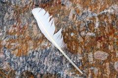 Vit fjäder på granitRock Royaltyfria Foton