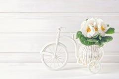 Vit fjädrar blommor Royaltyfria Bilder