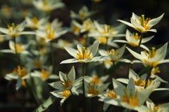 Vit fjädrar blommor Royaltyfri Fotografi