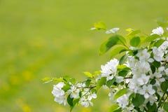 Vit fjädrar blommor arkivbilder