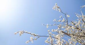 Vit fjädrar blomningen royaltyfri bild