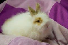 Vit fluffig liten kanin på lilorna Royaltyfri Fotografi