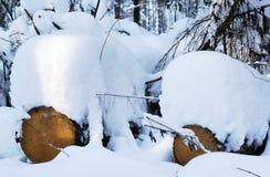Vit fluffig snö driver i skogen på träd Royaltyfria Foton