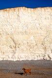 Vit framsida för kritaklippa med Pebble Beach och hund som går på beac Fotografering för Bildbyråer