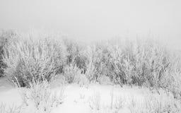 Vit frost Arkivfoton