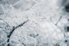 Vit frost på kala filialer av trädet i vinter Royaltyfri Fotografi