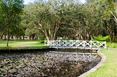 Vit gångbanabro över lotusblommadammet med dess skugga på vattnet i närbild med skogen på bakgrunden på Sydney arkivfoto