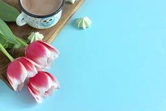 Vit vit gräns för röd tulpan på den blåa marshmallowen för bakgrundskakaokopp Royaltyfri Foto