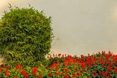 Vit gränsvägg med den röda blomman och gräsplanbusken inklusive kopieringsutrymme för din text arkivbild