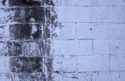 Vit & grå betongvägg Royaltyfri Foto