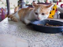 Vit gula Cat Feed Cat Food Royaltyfria Foton