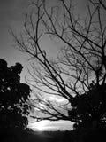 Vit härlig solnedgångsikt för svart anf i risfältfält och filialträd arkivbilder
