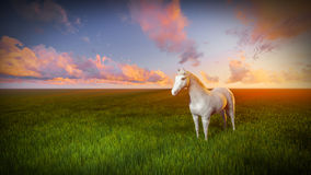 Vit häst Royaltyfri Foto