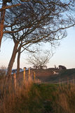 Vit häst för forntida krita i landskap på Cherhill Wiltshire engelska Arkivbilder