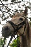 Vit häst royaltyfria bilder