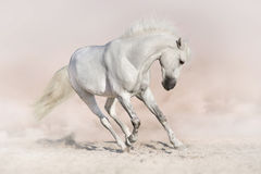 Vit häst i ljus backround royaltyfri foto