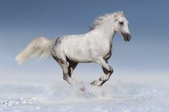 Vit häst i snö royaltyfria bilder