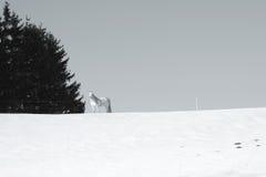 Vit häst i snön arkivbilder