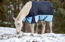 Vit häst i snön Royaltyfri Fotografi