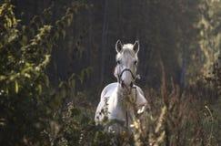 vit häst i trät Royaltyfri Fotografi