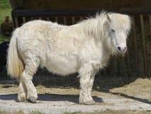 Vit häst med långt hår Arkivfoto
