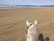 Vit häst på den Pismo stranden, Kalifornien arkivfoto