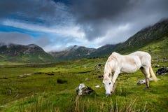 Vit häst på en regnig dag royaltyfri foto