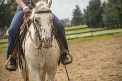 Vit häst som går med ryttaren Royaltyfri Foto