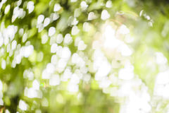 Vit hjärtabokeh på grön bakgrund Arkivbild