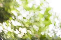 Vit hjärtabokeh på grön bakgrund Royaltyfria Bilder