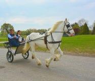 Vit häst och vagn Royaltyfri Foto