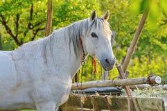 Vit häst och vagn Royaltyfri Fotografi