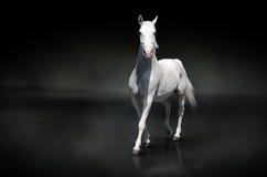 Vit häst på black Arkivbilder