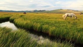 White horse on a green meadow in mountains Stock Footage