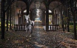 Vit häst - skogdröm Royaltyfri Fotografi