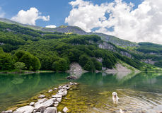 Vit hund i sjön Royaltyfri Foto