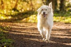 Vit hund i skogen Royaltyfri Fotografi