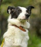 Vit hund med svarta fläckar royaltyfri fotografi