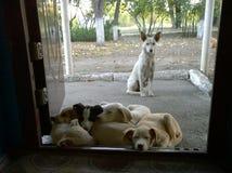 Vit hund och hennes valpar arkivfoto